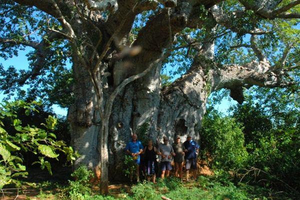 Baobab on Situ island
