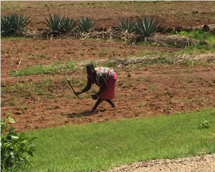 local woman which was busy sowing some plants