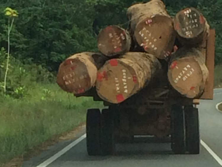 African monsters carrying logs – Lipstick nearly drove into these logs the night before…
