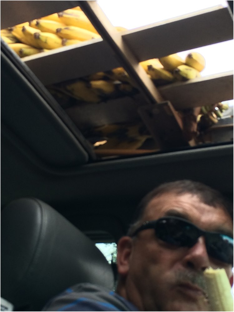 Andre enjoying a banana freshly fetched from Lipsticks roof through the sun roof