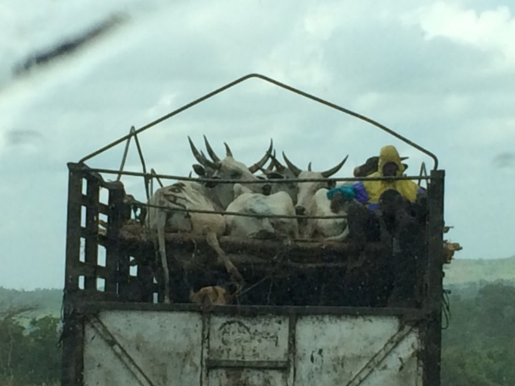 Animals could be seen transported in the most gruesome conditions