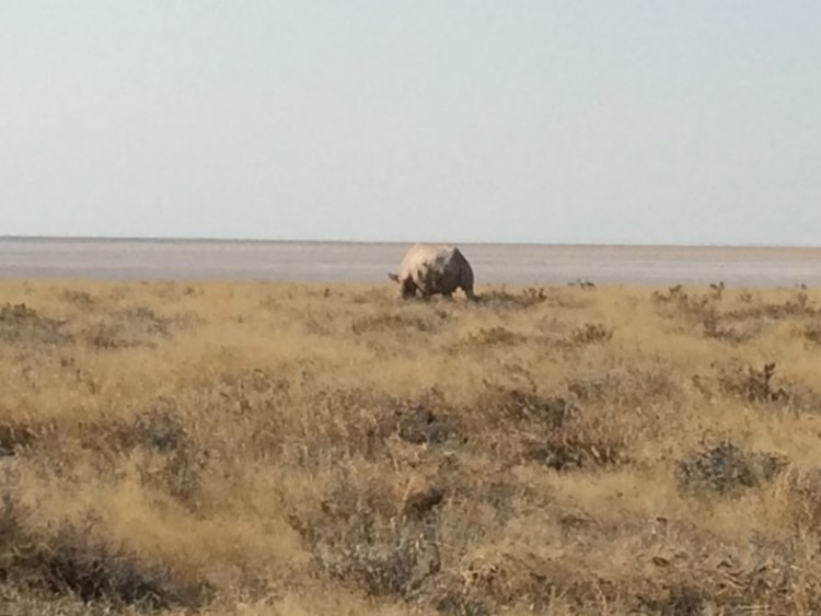 A Rhino having lunch in some distance
