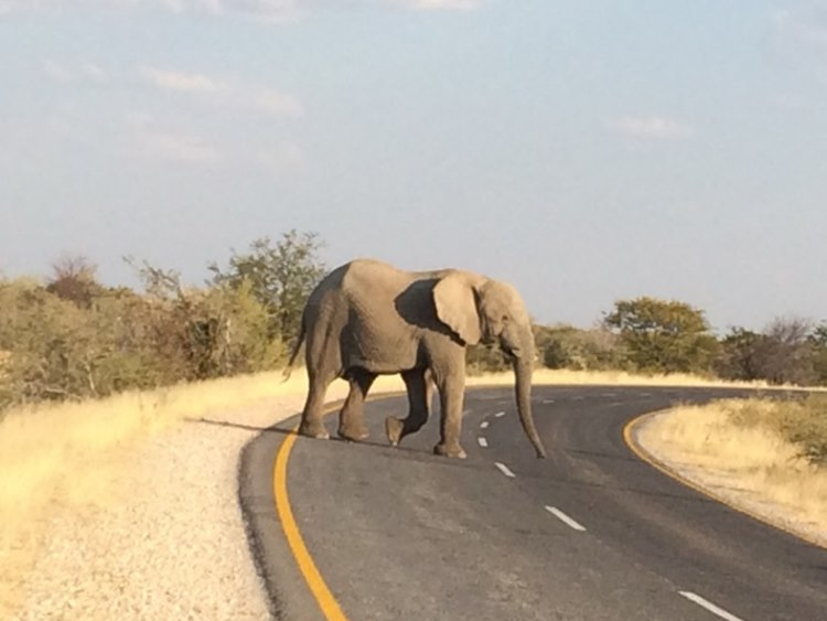 Elephants highlighting the fact that left hand drive is a must in Namibia and NOT right hand drive to which the team got used since way up in Morocco.