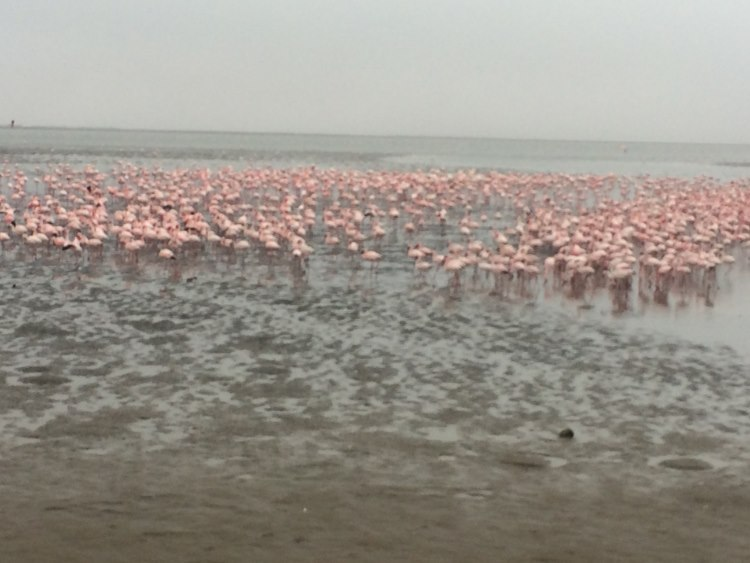amazing Flamingo spots