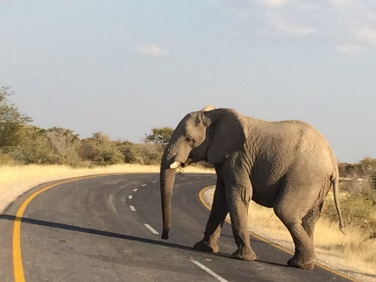 the team experienced road blocks of a different type not yet seen further up in Africa