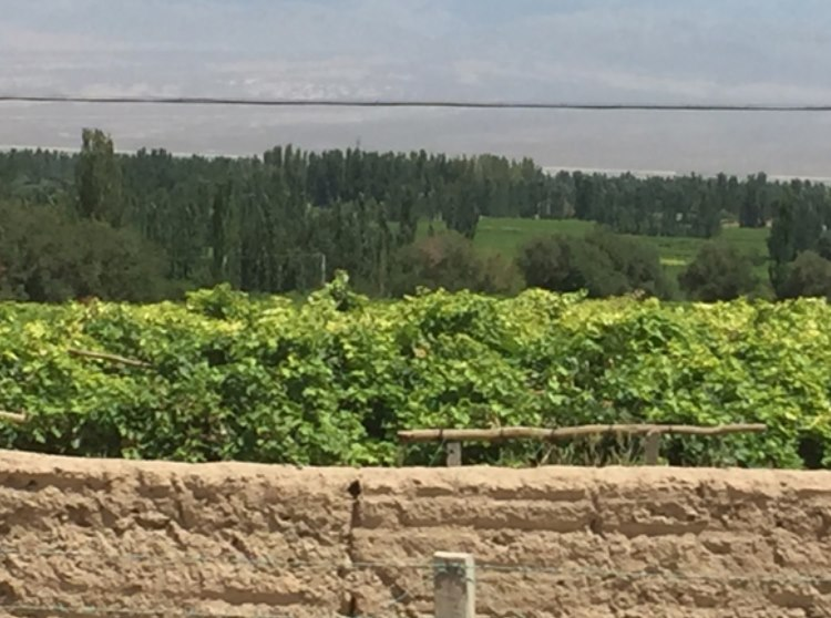 Grapes and lush green lands can be seen for some 1000m on either side of the road