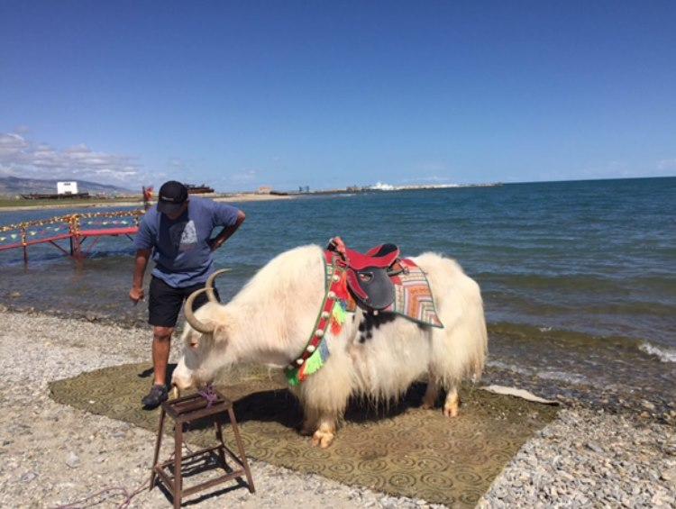 Yaks are offered to ride around on them